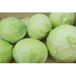 Chou Vert Lisse - 1kg