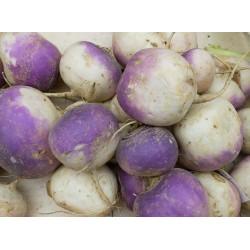 Navet Violet Bio - 1kg