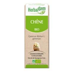 Chêne Macérat Bio - 50ml - HerbalGem