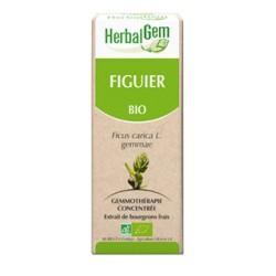 Figuier Macérat Bio - 50ml - HerbalGem