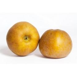 Pomme Canada Bio - 1 kg