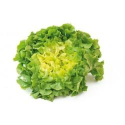Salade Scarole Bio - Pièce